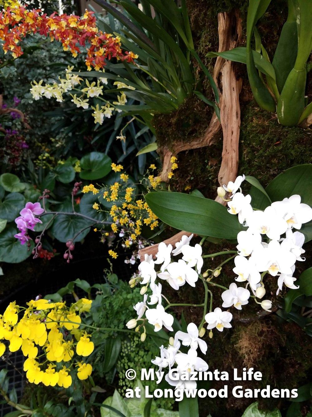 longwood-gardens-10
