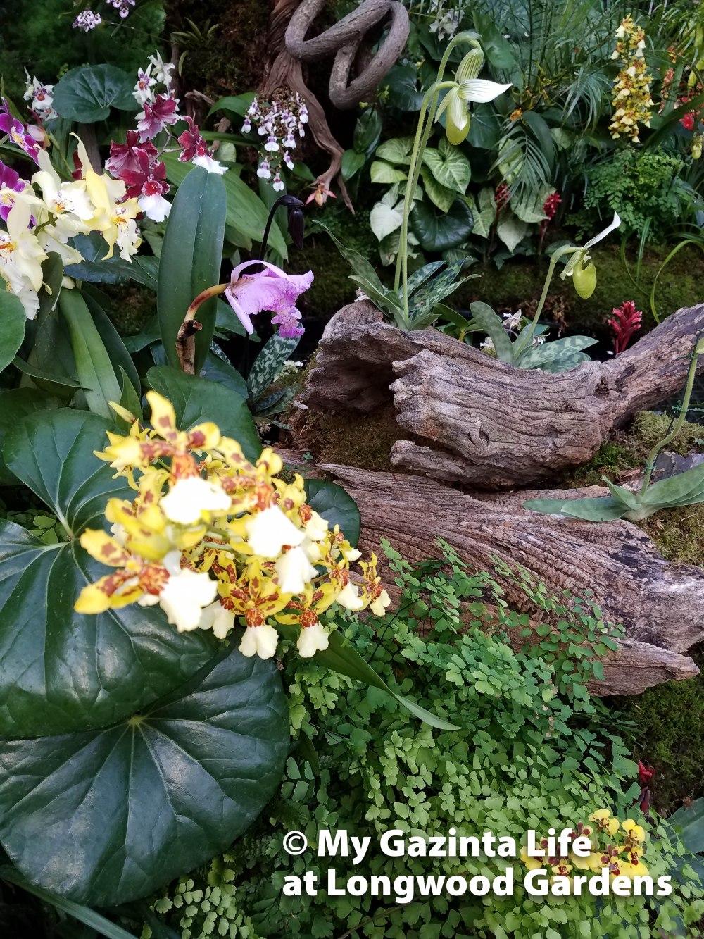 longwood-gardens-13