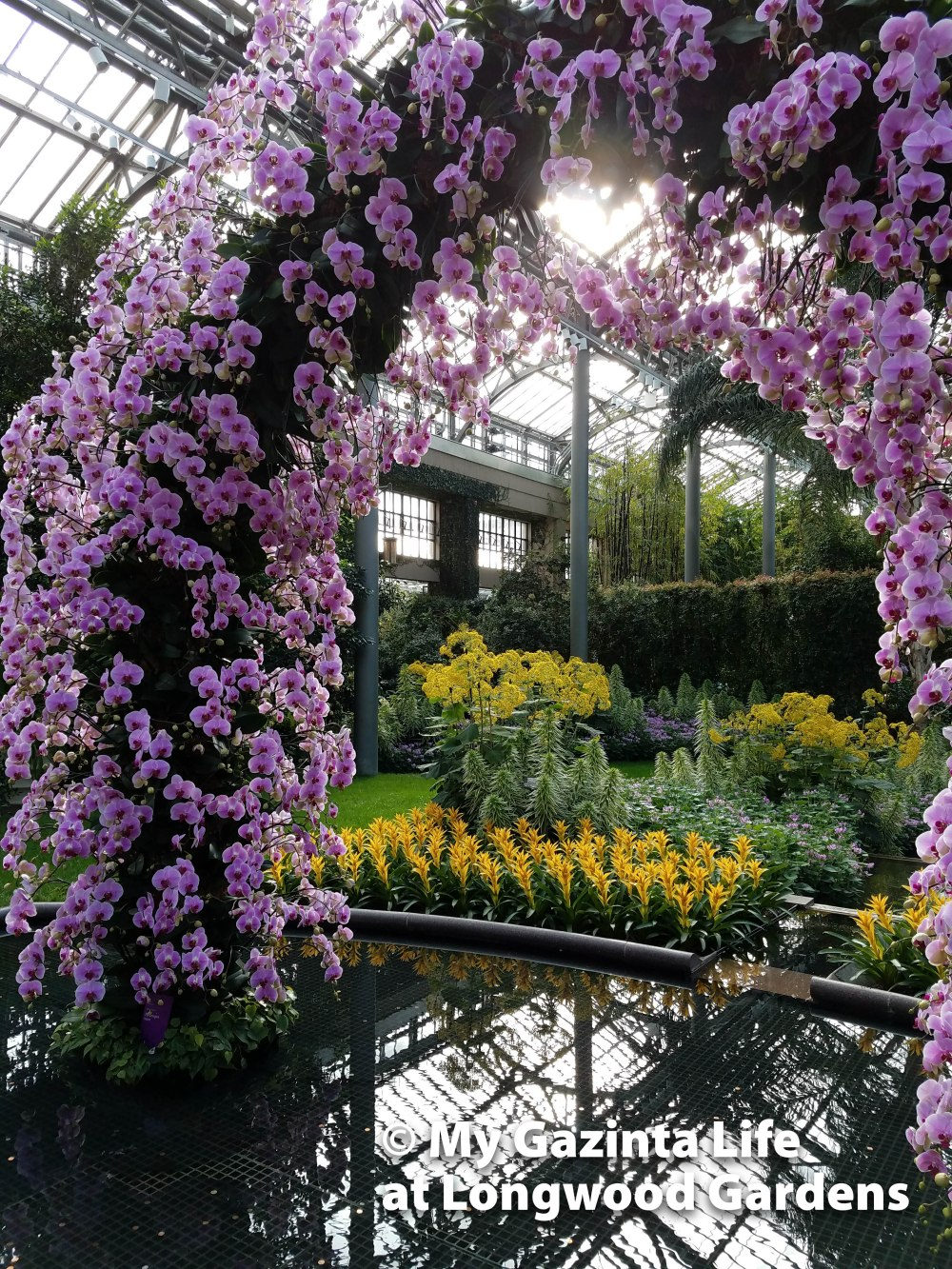 Gazinta life hits the road to longwood gardens the orchid for Longwood gardens address