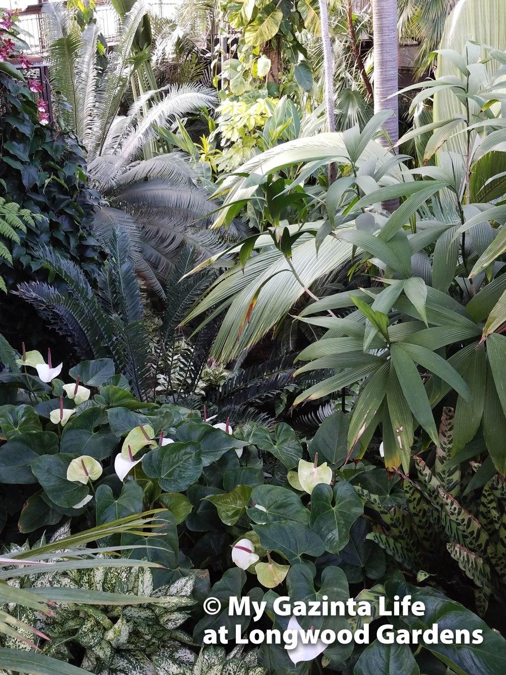 longwood-gardens-48
