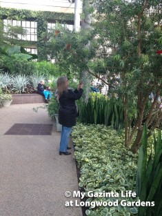 longwood-gardens-57